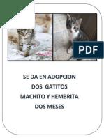 Gatos en Adopcion Imprimir