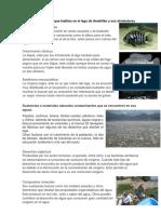 Tipos de Seres Vivos Que Habitan en El Lago de Amatitlán y Sus Alrededores