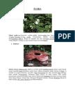 Jenis Flora Dan Fauna Beserta Daerah Asal