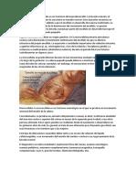 Embriologia Pregunta 3 Microcefalia Macrocefalia Hidrocefalia