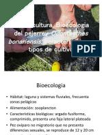 Aterinicultura (1)
