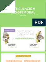 Articulación Coxofemoral.pptx