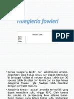 PPT Naegleria fowleri