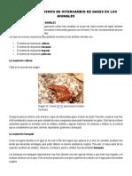 Tema n 1 Mecanismos de Intercambio de Gases en Los Animales