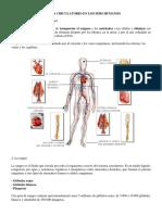 Sistema Circulatorio en Los Sers Humanos