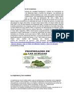 Análisis y componentes de la espinaca.docx