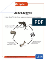 MosquitoLifecycle.pdf