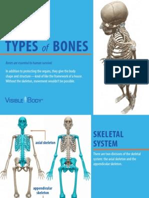 VisibleBody - Types of Bones eBook - 2018 | Vertebral Column