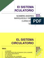 Sistema Circulatorio Andres Marquiegui