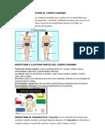 Investigar e Ilustrar El Cuerpo Humano