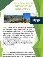 Flora y Fauna en El Departamento de Huancavelica