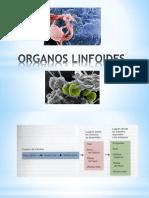 Organos Linfoides. (1)