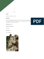 animalesclasificacion.docx