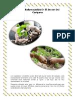 Plan de Reforestación en El Sector Del Casigana