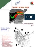 Aparato Reproductor 2015