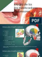 Fisiología de Los Músculos Masticadores y Depresores