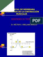 Potencial Acción-Contracción Muscular