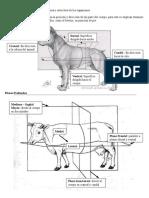resumen-osteologia-bovina