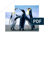 Picture of Penguins