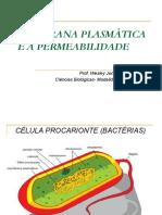 Membrana Plasmática e a Permeabilidade