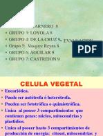 u 1 Sem 1 Celulas Vegetales