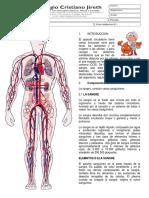 Sistema Circulatorio 6