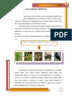 318726203-Las-Cadenas-Troficas.docx