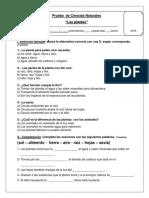 prueba de ciencias ( plantas) n°1