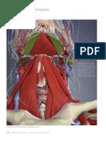 The Temporomandibular Joint, Part II (Myofascial Techniques)