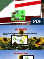 las plantas y su funcion