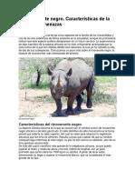 El rinoceronte negro.docx