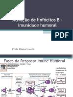 Ativação de Linfócitos B - Imunidade Humoral