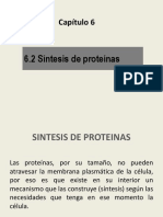 cap6b.SintesisProteinas