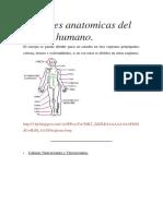 Partes Anatomicas Del Cuerpo