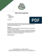 Olive Trees Arborist Report 2007