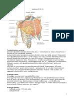 3.Anatomia.03-03-14