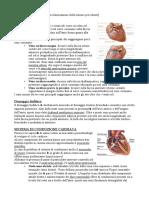 6.Anatomia.10-03-14