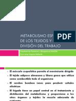 1.METABOLISMO ESPECÍFICO DE LOS TEJIDOS 2016