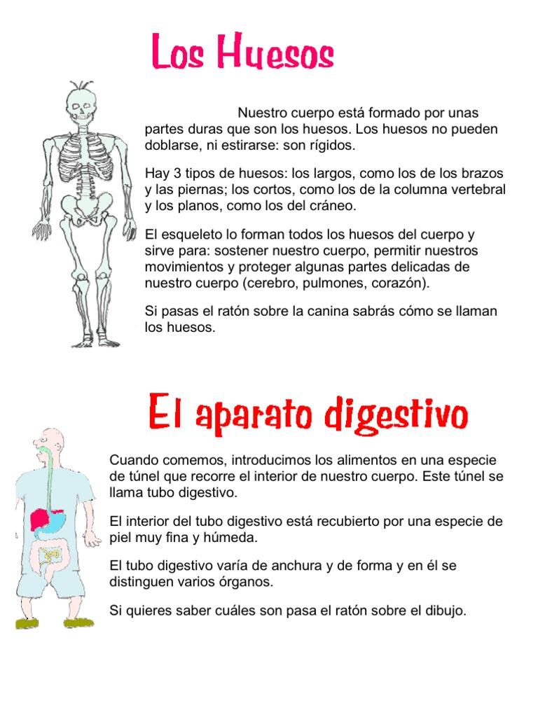 Nuestro cuerpo est formado por unas partes duras que son los huesos