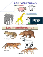 vertebrados mamiferos 5