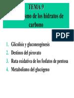 Metabolismo de los hidratos de carbono.pdf