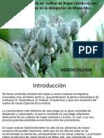 presentacion-cochinilla-agroecologia