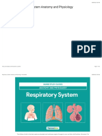 Respiratory System Anatomy and Physiology • Nurseslabs