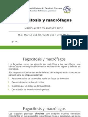 función de macrófagos de diabetes tipo 1