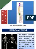 9. Médula Espinal Ppt