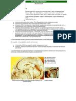 glandula.pdf