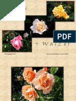 Www.power Point.ro 302 Valsul Trandafirilor Superb