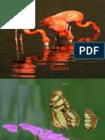 Www.power-point.ro 262 Natura 3