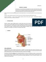 29 Anatomia II 29.02.2016 Faringe e Laringe
