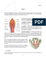30 Anatomia II 02.03.2016 Laringe e Mediastino